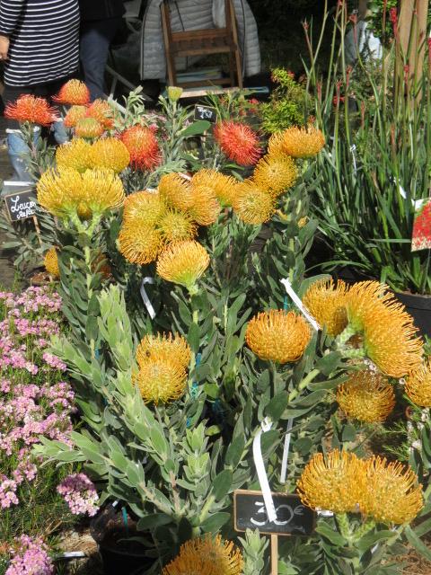 Foire des plantes d'Iturraran (Pays Basque Espagnol) Img_0319