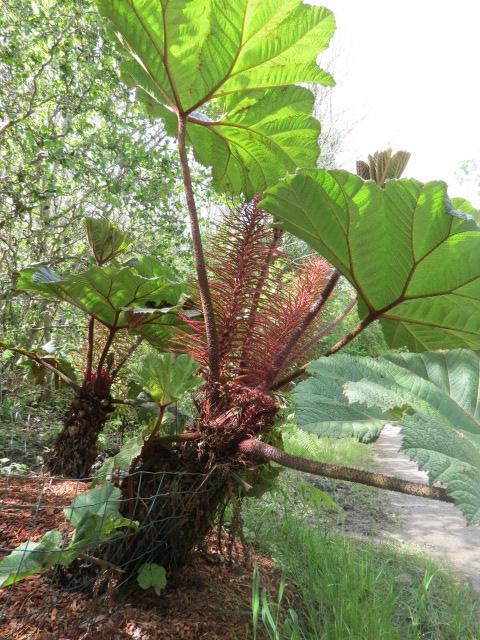 Foire des plantes d'Iturraran (Pays Basque Espagnol) Img_0326