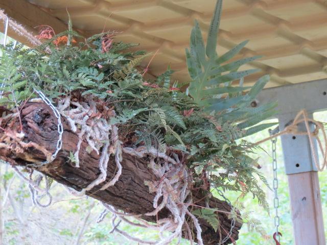 Foire des plantes d'Iturraran (Pays Basque Espagnol) Img_0329