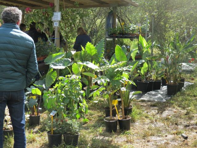 Foire des plantes d'Iturraran (Pays Basque Espagnol) Img_0330