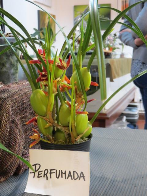 Foire des plantes d'Iturraran (Pays Basque Espagnol) Img_0331