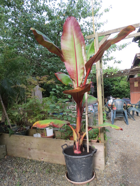 jardin gersois 2019 - Page 4 Img_0533
