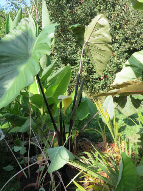 jardin gersois 2019 - Page 2 Img_0811