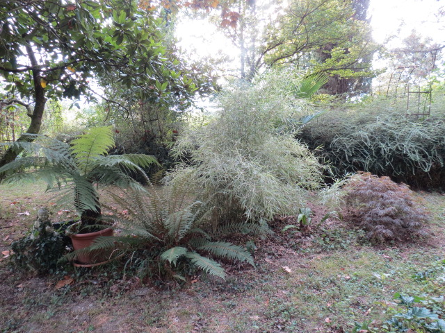 jardin gersois 2019 - Page 2 Img_0914