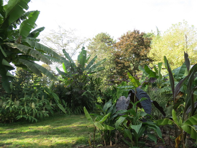 jardin gersois 2019 - Page 4 Img_1018
