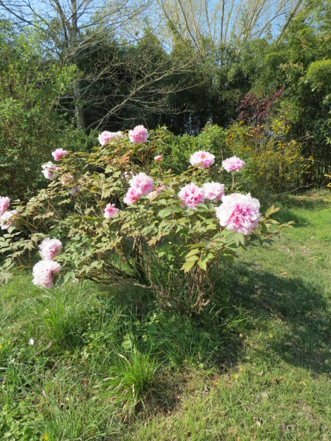 jardin gersois 2019 - Page 4 Img_1312
