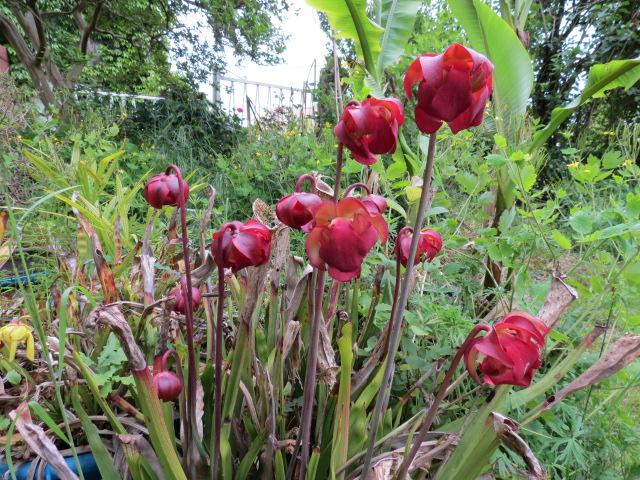 mon jardin 2020 Img_1410