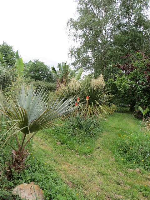 mon jardin 2020 Img_1412