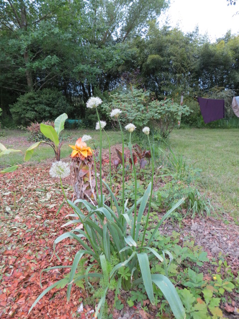 mon jardin 2020 Img_1413