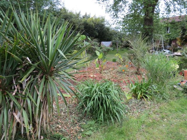 mon jardin 2020 Img_1414