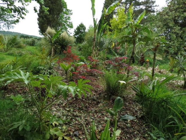 mon jardin 2020 Img_1512