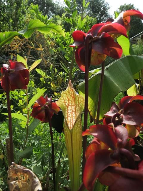 mon jardin 2020 Img_1528
