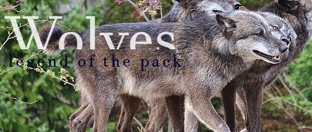 Wolves - legend of the pack Bitten10