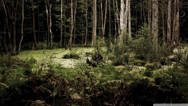 The Western Outlands  Swamp-10