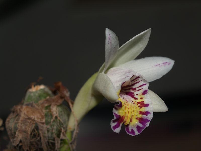 Orchideen - Seite 101 Pb200011