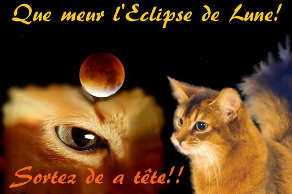 Un Rp avec un chaton n'est pas si ennuyeux qu'il y parait. Eclips11