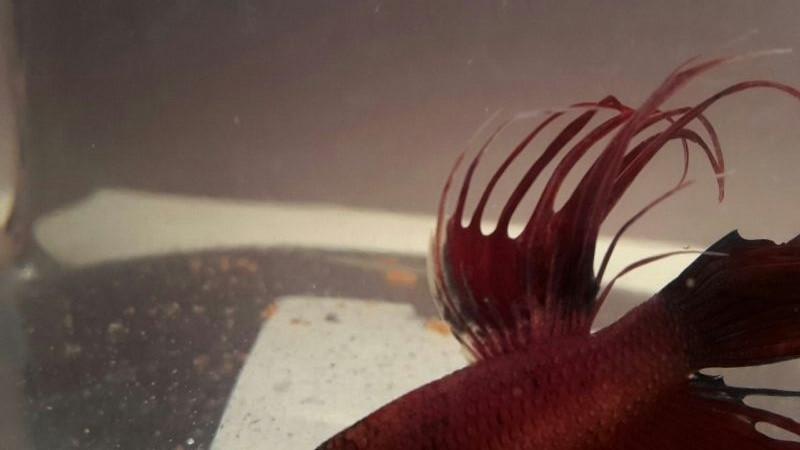 Nouvel aquarium D43b7110