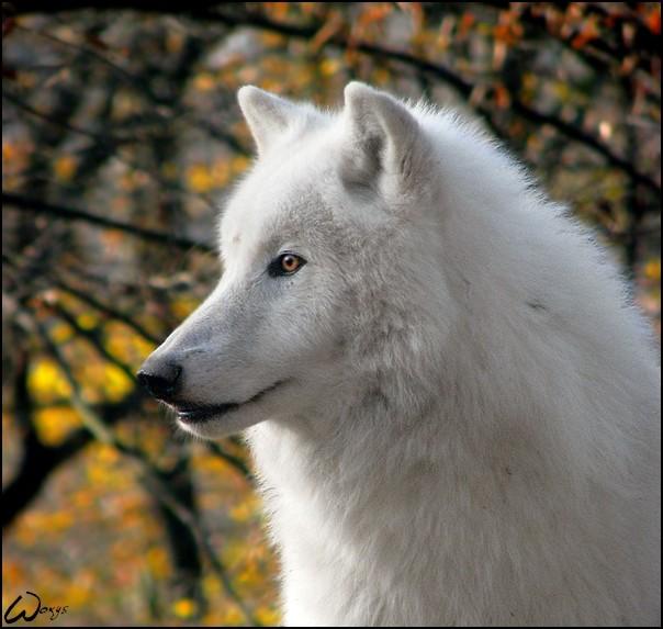 Frost.::.Male Frost11