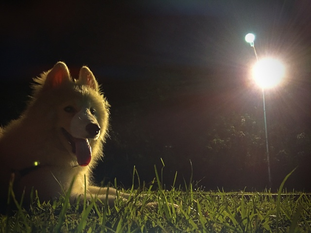 General Luna (8 months) : Photo Update! Img_2011
