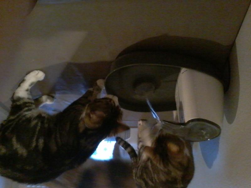 Fontaine à eau Cat Mate 20151110
