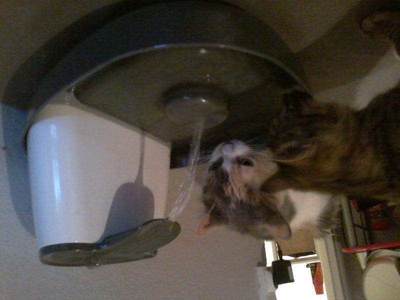 Fontaine à eau Cat Mate 20151111