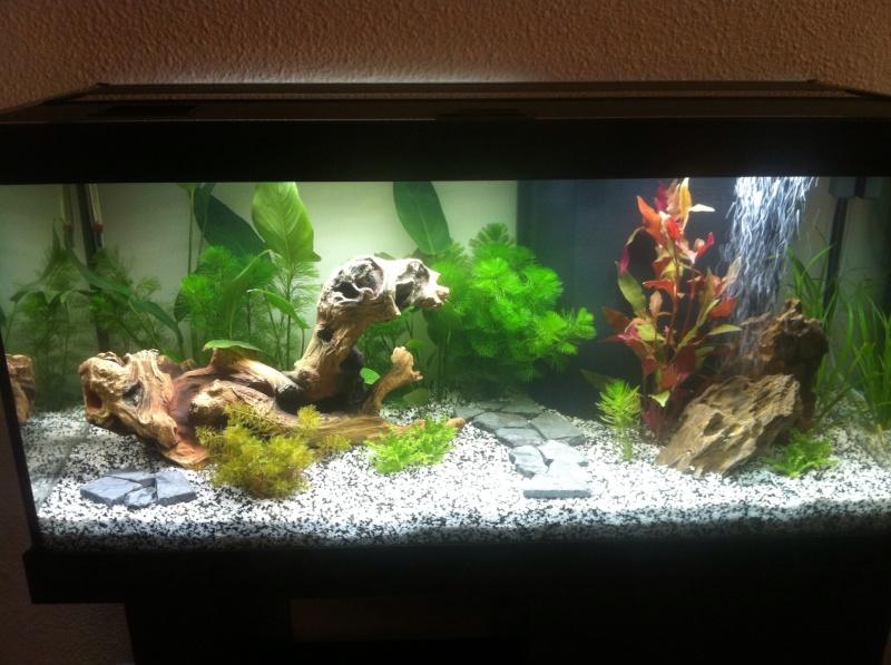 [Débutant] Aquarium 102 litres entretient. 12248410