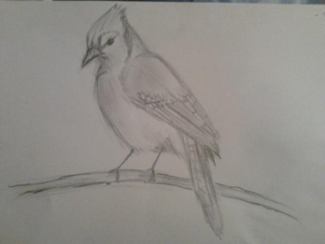 Vos dessins hors sujet - Page 4 Photo040