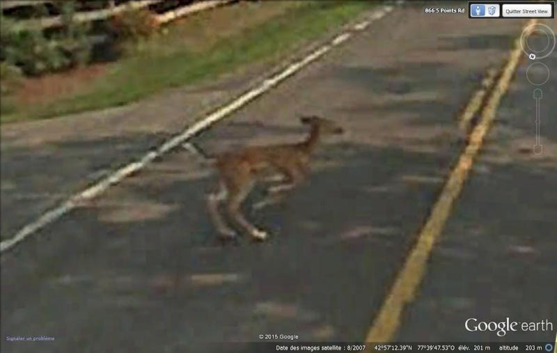 Endroits insolites en Street View Faon_r10