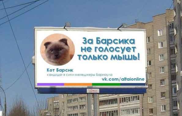 Un chat candidat aux municipales en Sibérie 2048x110