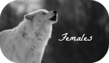 Female Bios
