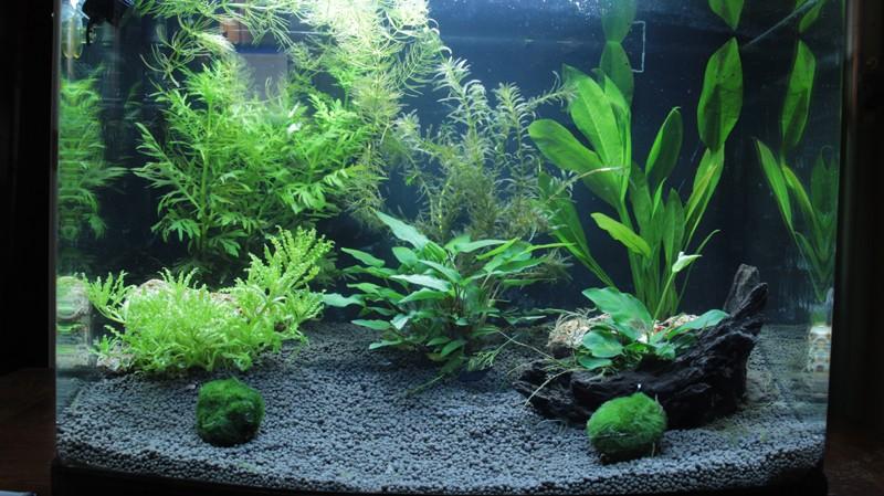 Retour a l'aquariophilie avec un 60 Litres et des crevettes Aquari14