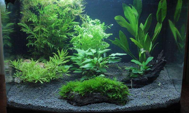 Retour a l'aquariophilie avec un 60 Litres et des crevettes Aquari15