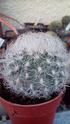Mes plantas Neopor11