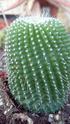 Mes plantas Parodi11