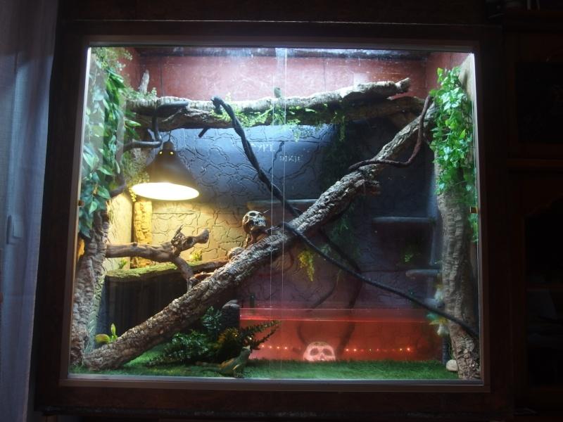 amenagement terrarium dragon d'eau  - Page 2 Pb290310