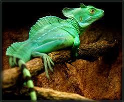 Bienvenue sur L'île aux reptiles!