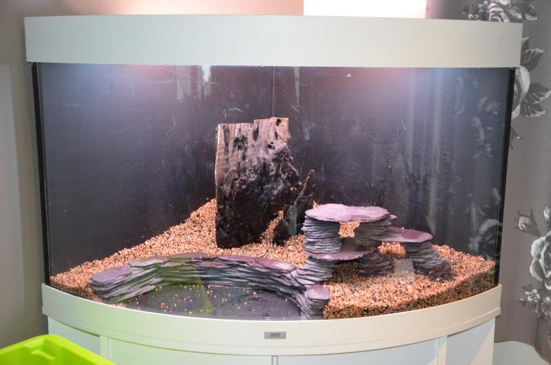 Mon premier aquarium - Juwel Trigon 190 l Dsc_0212