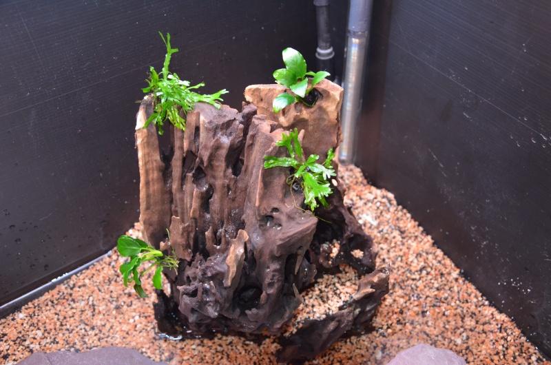 Mon premier aquarium - Juwel Trigon 190 l Dsc_0213