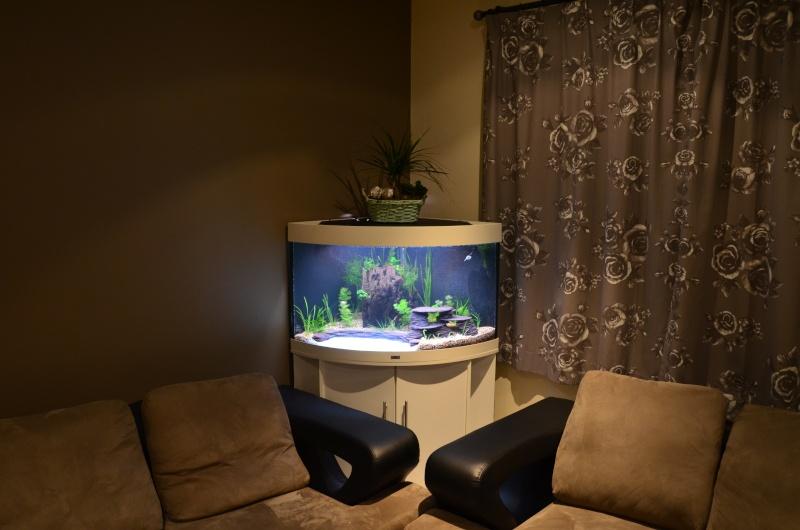 Mon premier aquarium - Juwel Trigon 190 l Dsc_0214