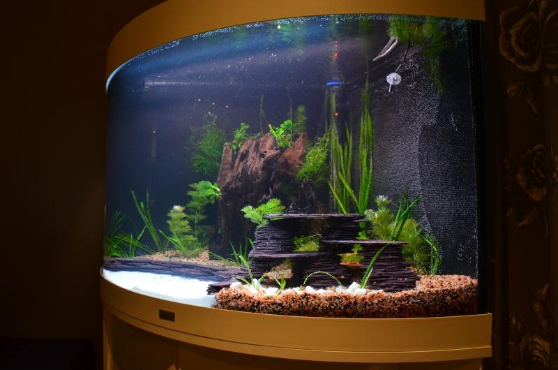 Mon premier aquarium - Juwel Trigon 190 l Dsc_0216