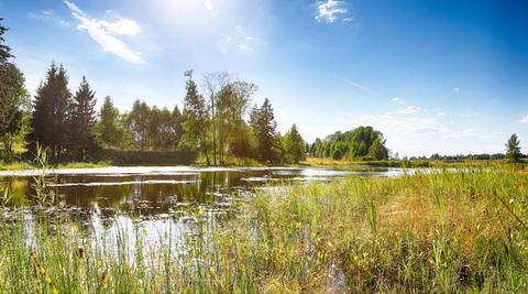 ДНП Лесное Озеро