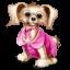 Декоративные и мелкие собаки
