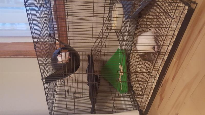 La cage Hanzy 20151219