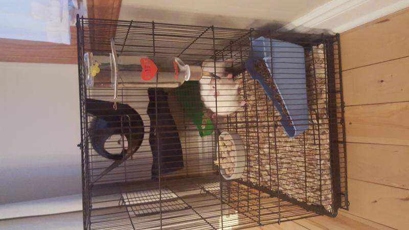 La cage Hanzy 20151221