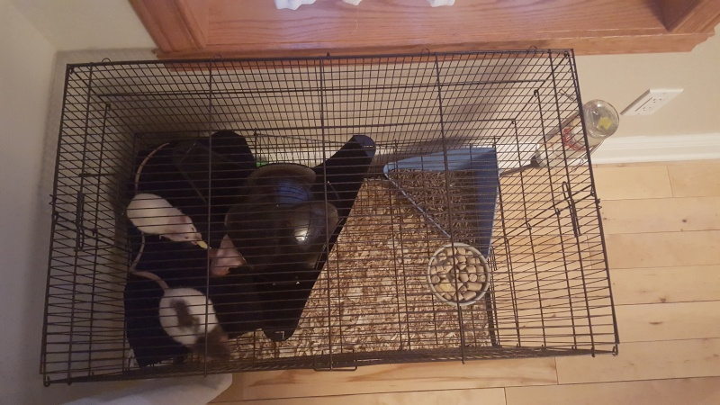 La cage Hanzy 20151222