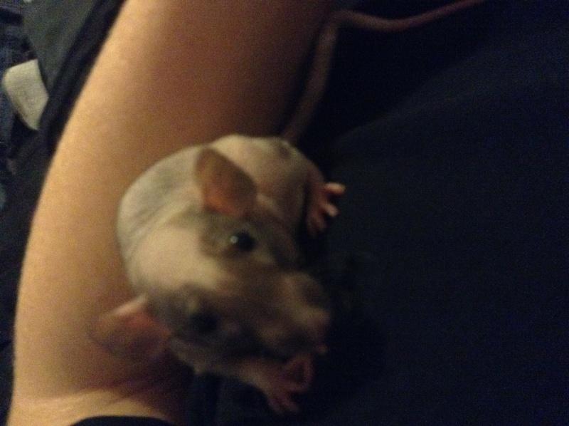Voilà les trois rattes ! Image13