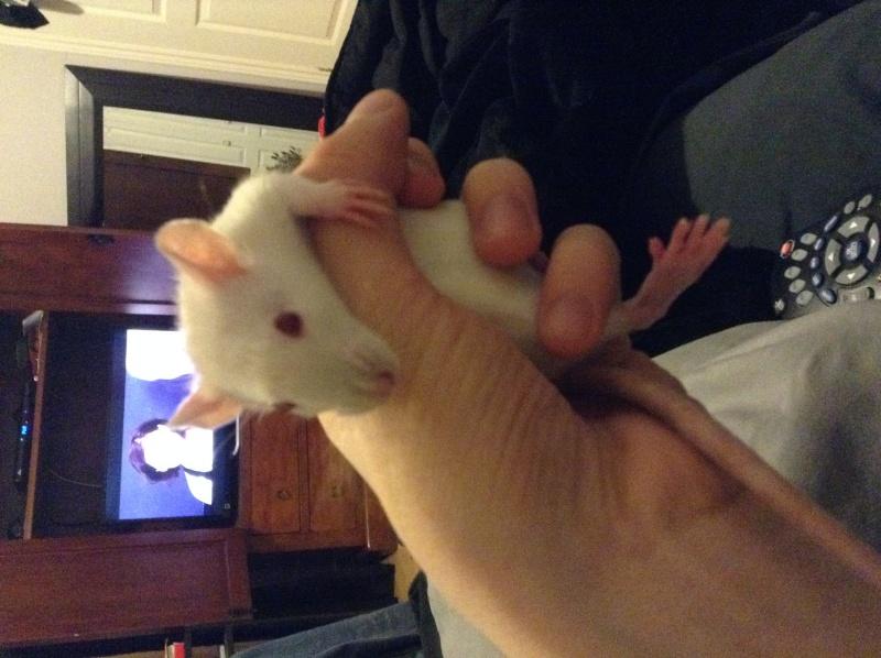 Voilà les trois rattes ! Image14