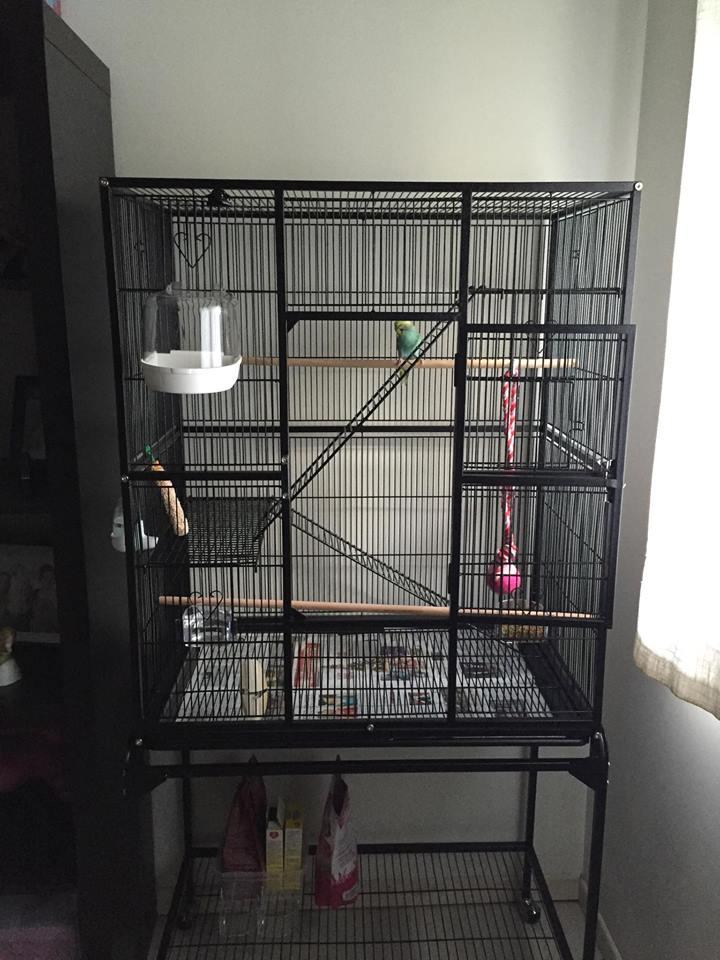 Besoin d'un coup de pouce pour choisir la nouvelle cage... 12277110