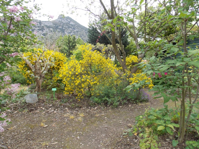notre jardin sauvage Dscn1715