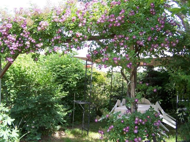 notre jardin sauvage Welche10